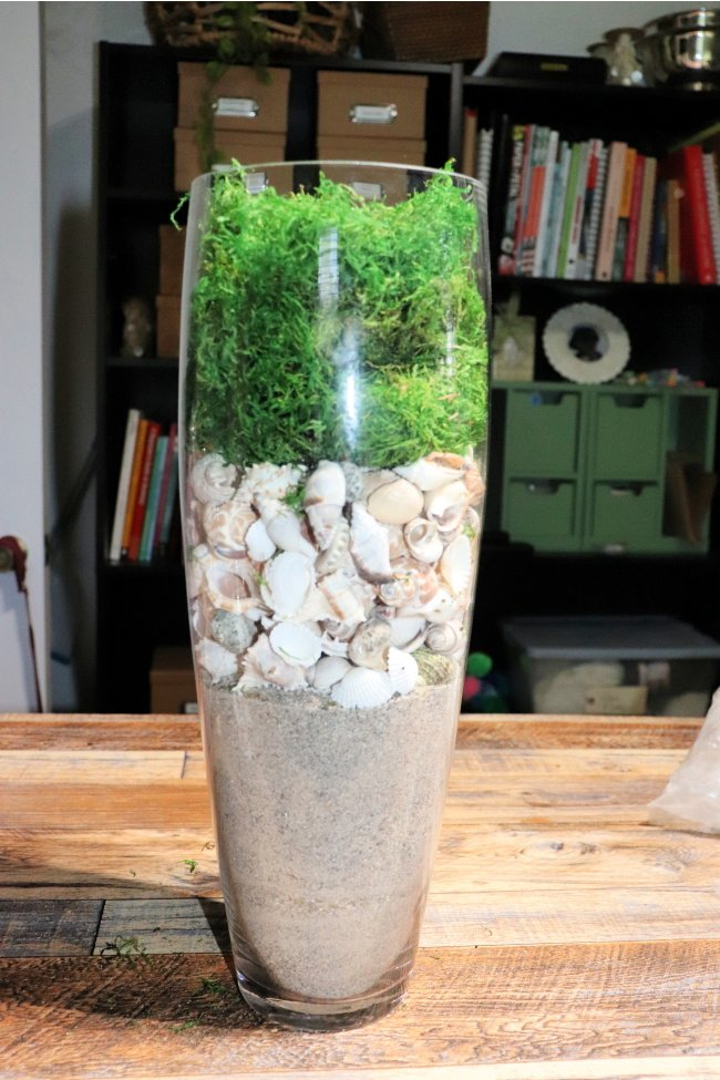 Vase filled with sand, shells and moss